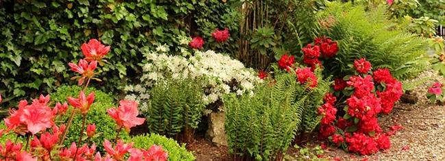 jardin-ombre-azalees-fougeres - a-lescalier
