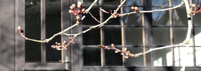 Côté jardin, prémices de printemps
