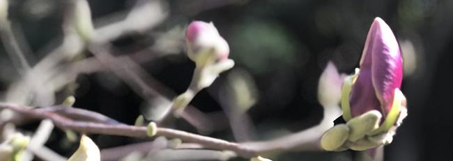 Côté jardin début avril
