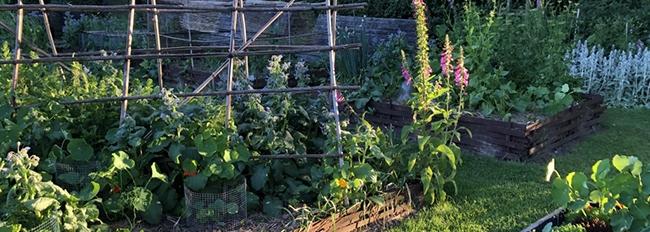 Côté jardin : les surprises de juin
